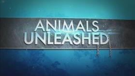 Lystikkäät eläinveikkoset
